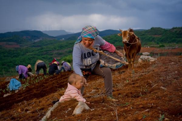 """商务部《2019中国电商兴农发展报告》:""""拼农货""""直连城乡需求"""