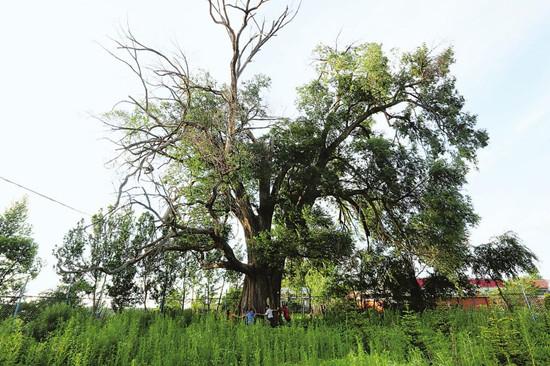 我省多措并举加强古树名木保护 已登记古树名木达到2万余棵