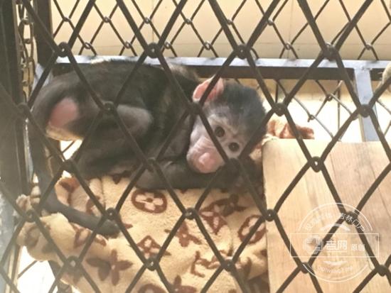 狒狒幼崽图片可爱
